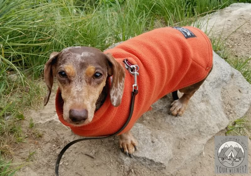 Teckelklub lightweight Dachshund fleece coat