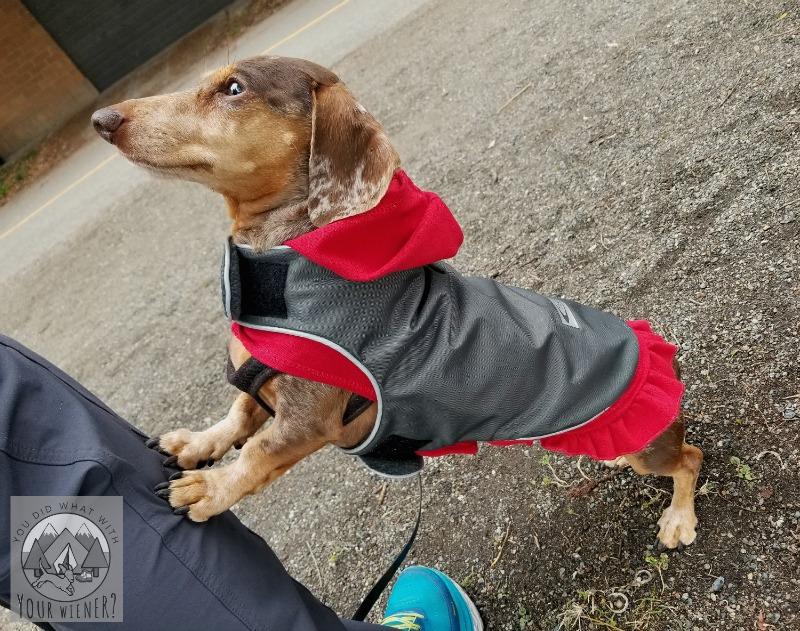 Teckelklub Dachshund Fleece Rain Jacket