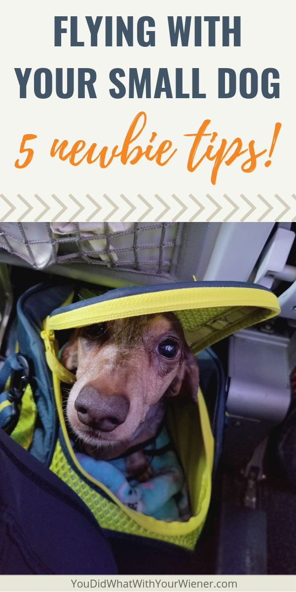 Planning to fly in-cabin with your small dog? Check out these important tips!