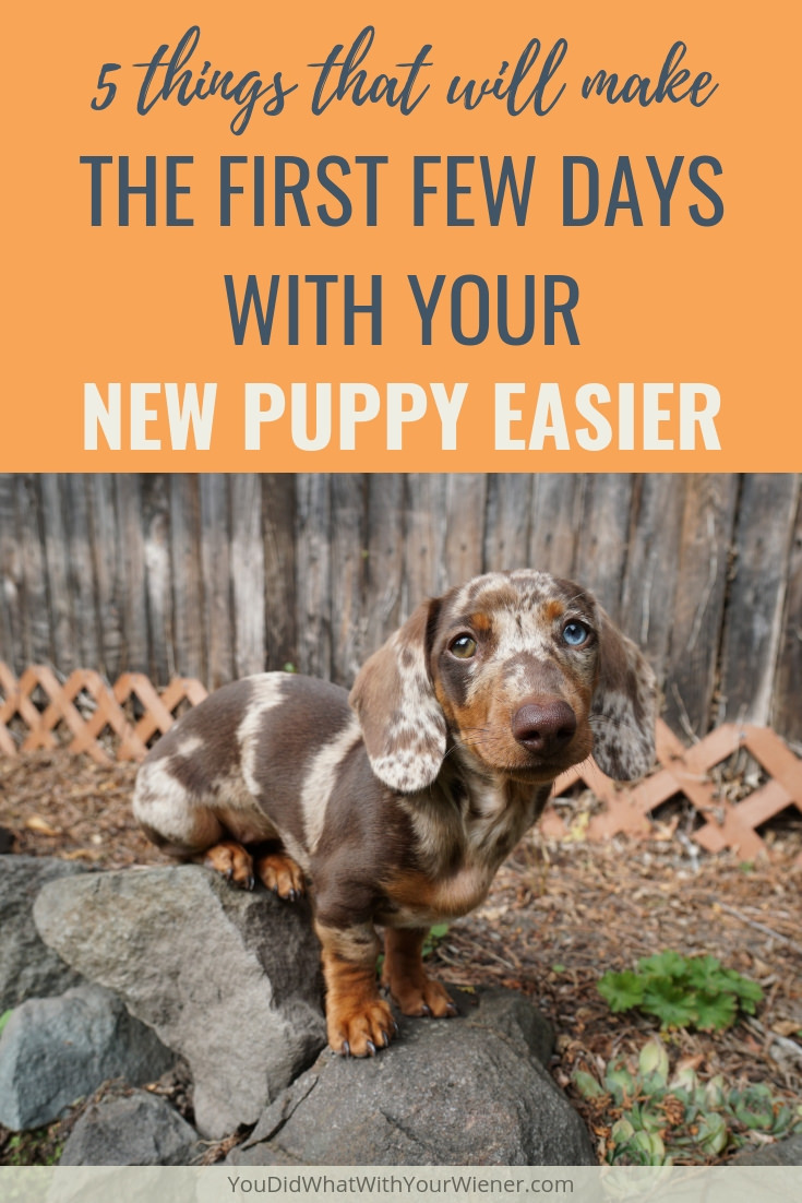 5 things that will make the first few days with your new dachshund puppy easier.