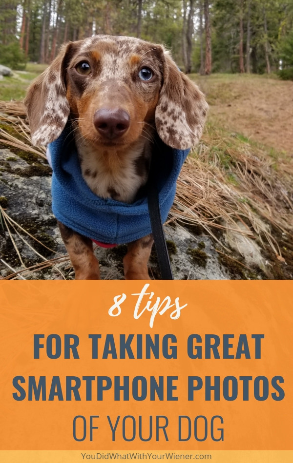 Check out this article for tips that will help you capture a great photo of your dog with your smartphone