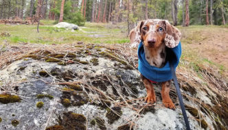 8 Smartphone Photography Tips for Taking Great Pictures of Your Dog