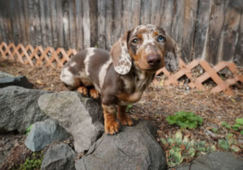 Doing These 5 Things Will Make Life with Your New Puppy Easier