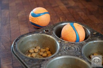 A muffin tin holds dog kibble in each muffing hole, covered by a small rubber ball to limit access to the food.