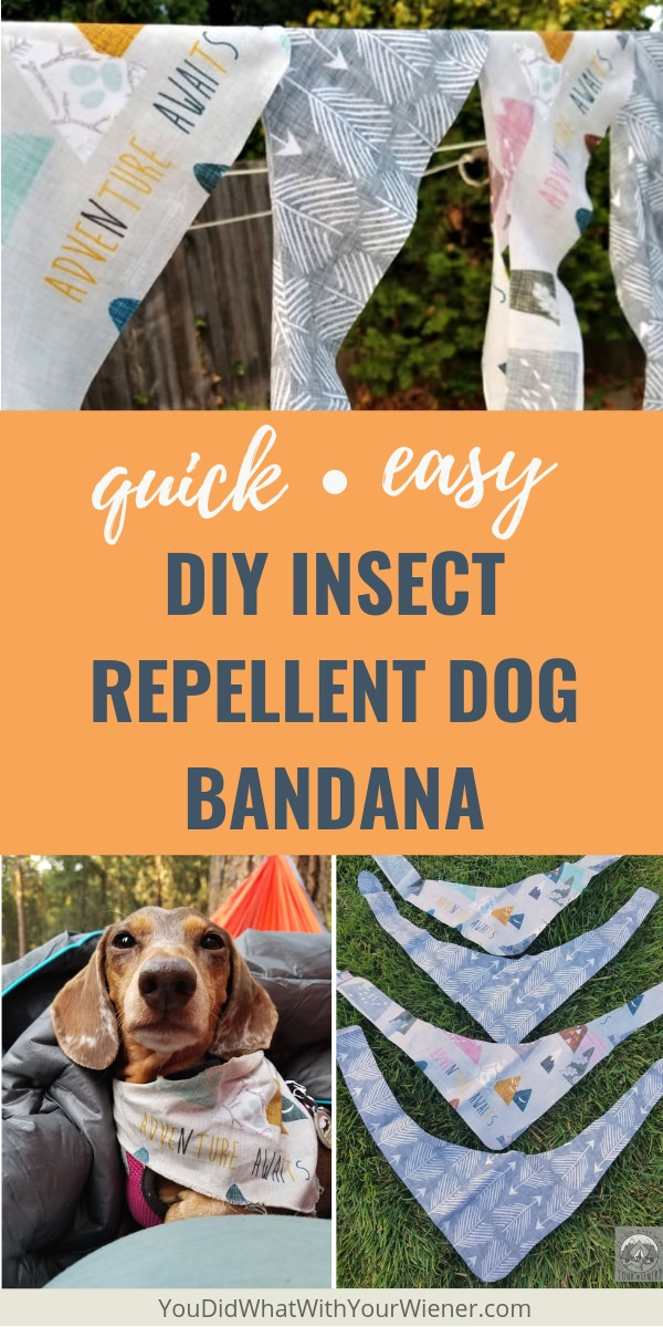 How to make an insect repellent bandana for your dog