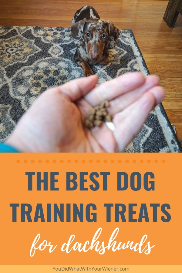 Contrary to popular belief, training a Dachshund is possible. To work through their stubbornness though, it's important to have the right treats.