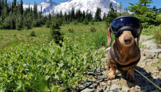 How to Enjoy National Parks with Your Dog
