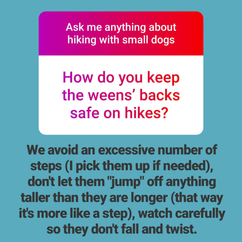 Reader Question: How do you keep your Dachshund's back safe on hikes?