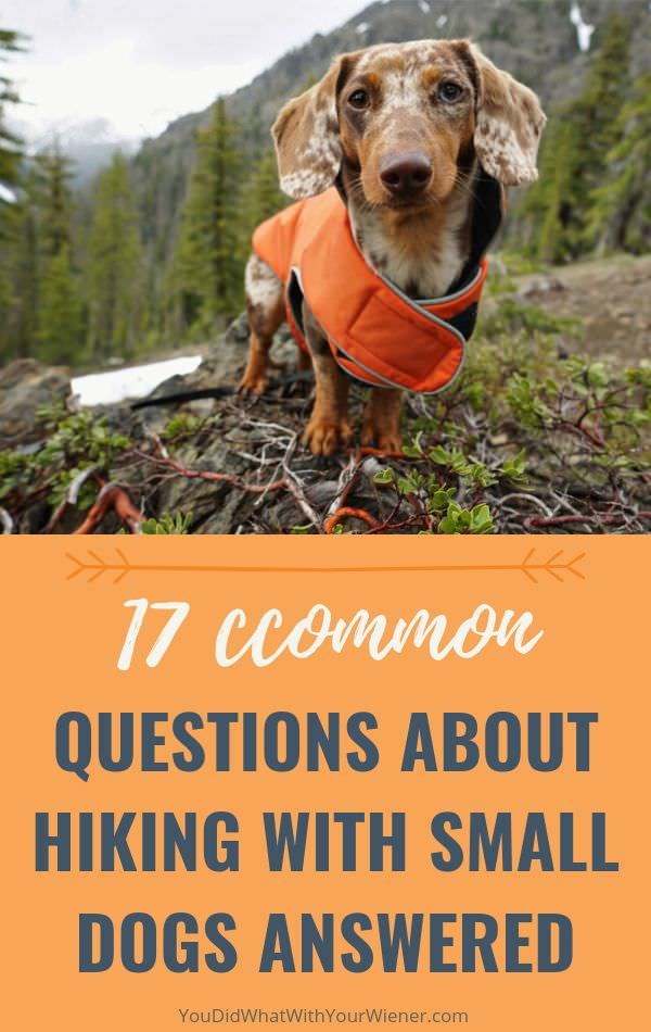 17 Common Questions About Hiking with Small Dogs Answered by an Expert