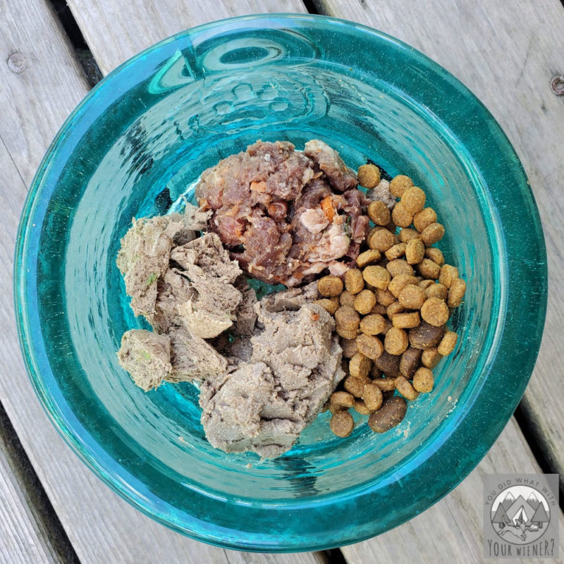 Raw, wet canned, dry kibble, and freeze dried raw dog food in a bowl
