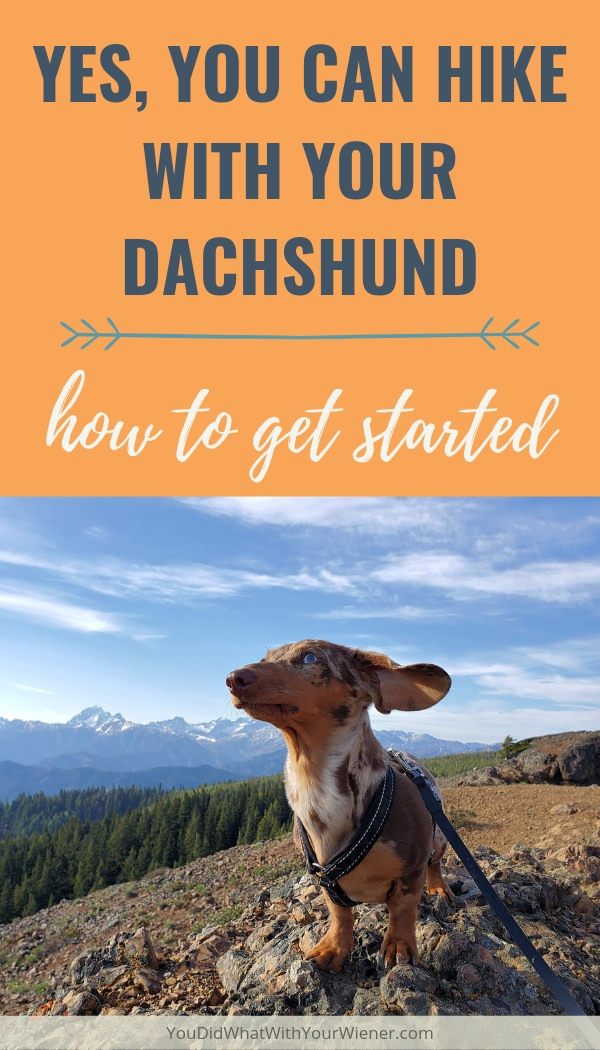 Just because Dachshunds are small and have short legs it doesn't mean they can't be good hiking companions