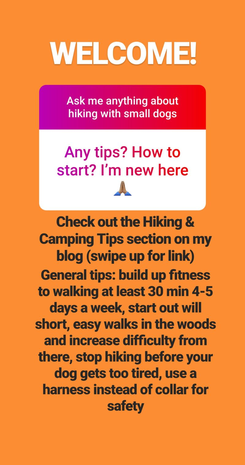 Reader Question: I'm new to hiking with my Dachshund. Do you have any tips for me?