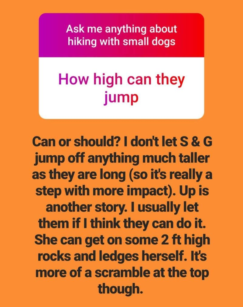 Reader Question Text: How High Can a Dachshund Jump?