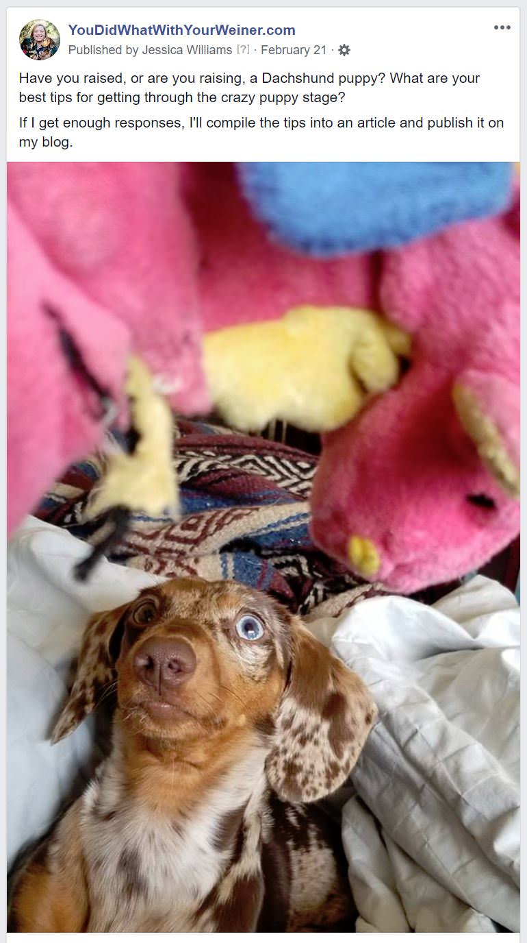 Facebook post asking Dachshund owners for their best puppy-raising tips