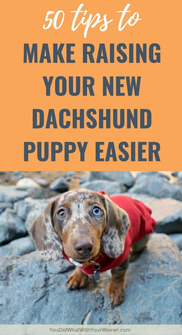 Dachshund Owners Answer: Tips to Make Life with Your New Puppy Easier