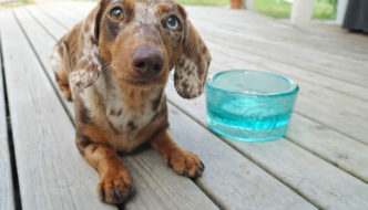 Contrary to popular belief, switching your dog's food can be a very good thing. Here's how to make the switch.