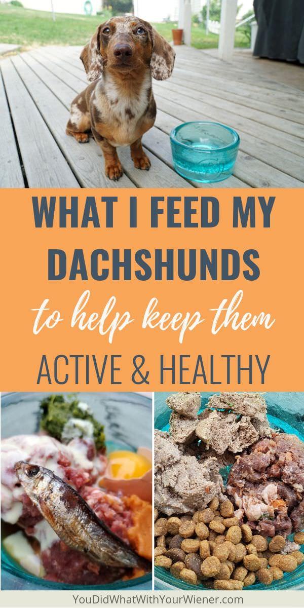 This is what I feed my Dachshunds to keep them healthy and active.