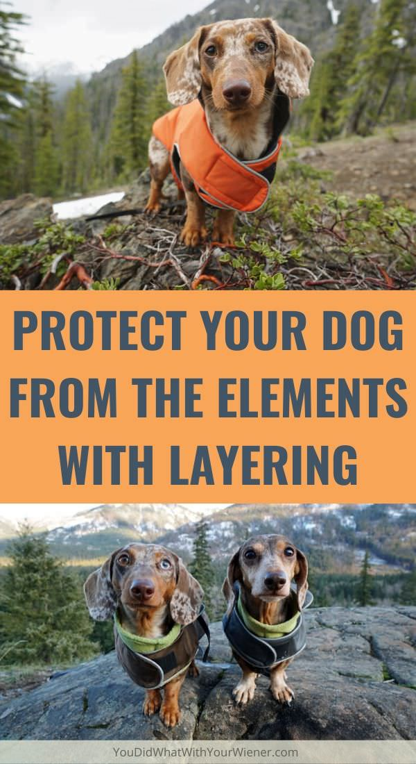 Protect Your Dog During any Weather Condition by Layering Jackets