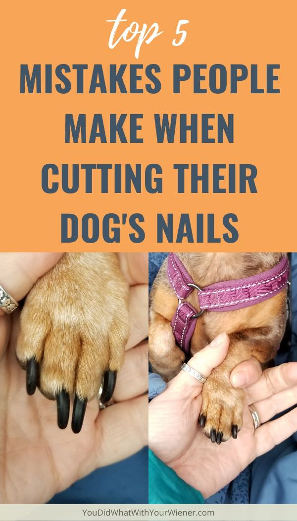 Top 5 Mistakes People Make When Cutting Their Dog's Nails - a dogs nails before and after being trimmed to the proper length