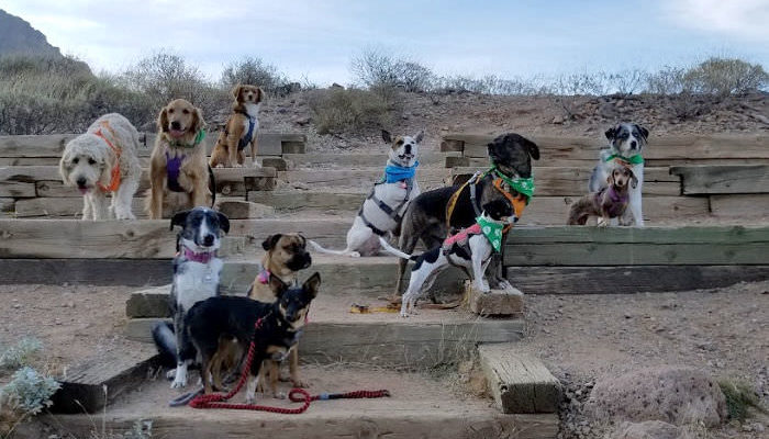 A pack of 10 hiking dogs posing for the camera
