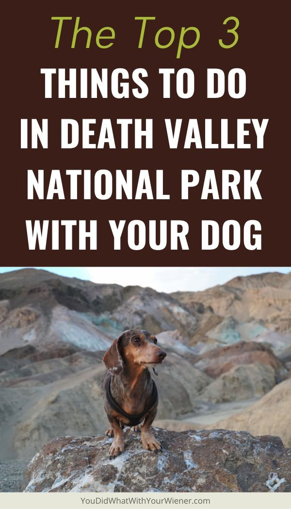 The 3 Best Things to do with Your Dog in Death Valley National Park