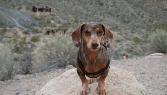 Best Places to Visit in Death Valley with Your Dog