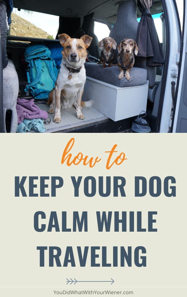 How can you keep your dog calm while traveling? The tips in this article will help solve that problem.