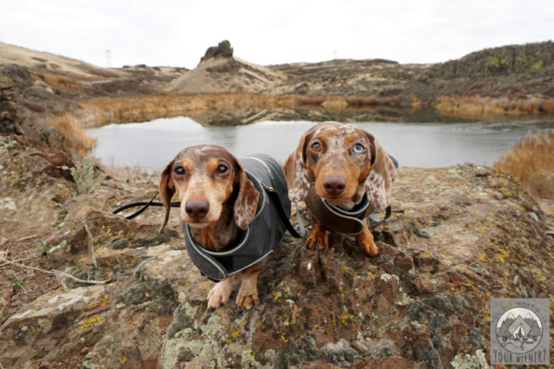 7 Reasons Why Hiking with a Small Dog is Better (than hiking with a big dog)