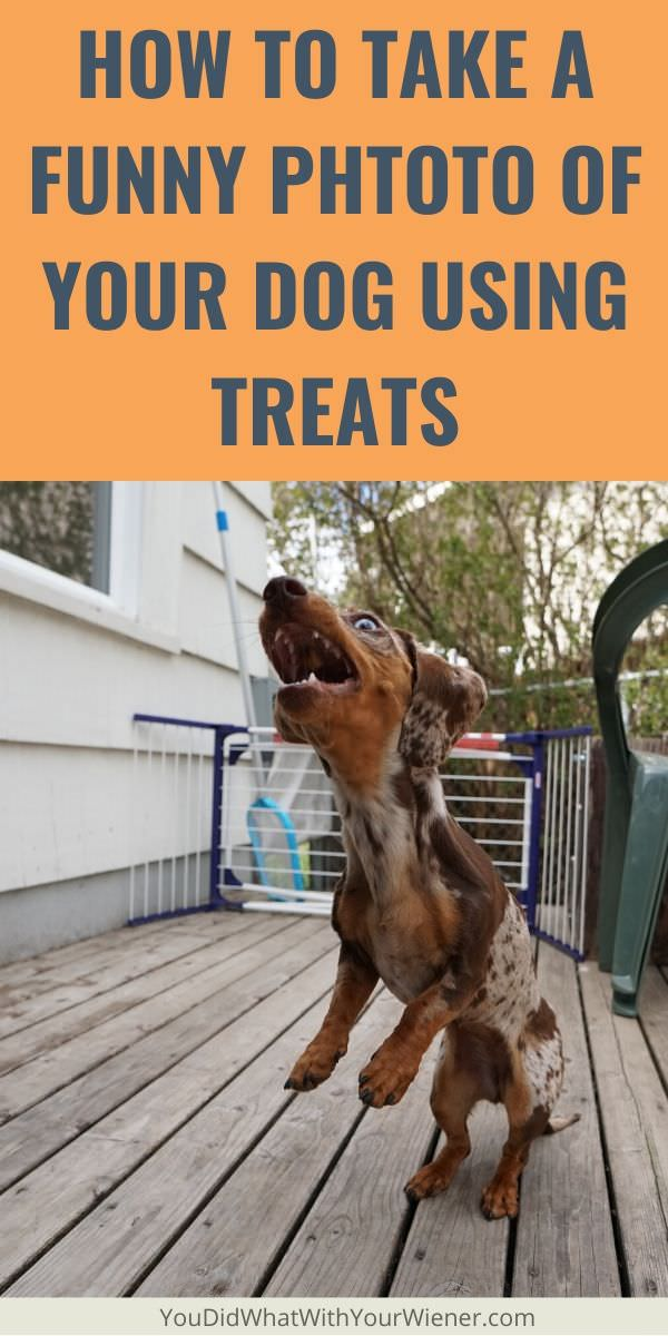 Tossing treats is a great way to capture your dog's funny faces in photos