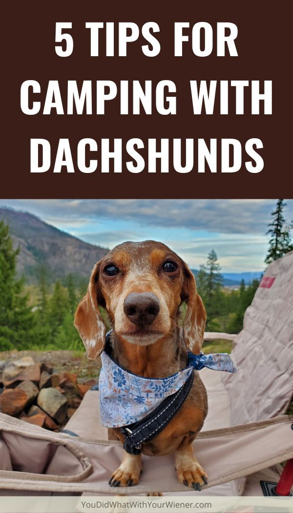 5 Tips for Camping with Dachshunds