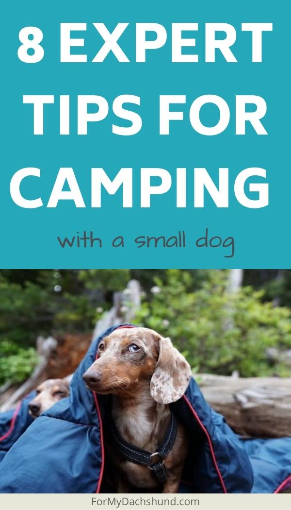 Camping with your dog? Here are 8 tips to help you have a better camping experience with your dog.