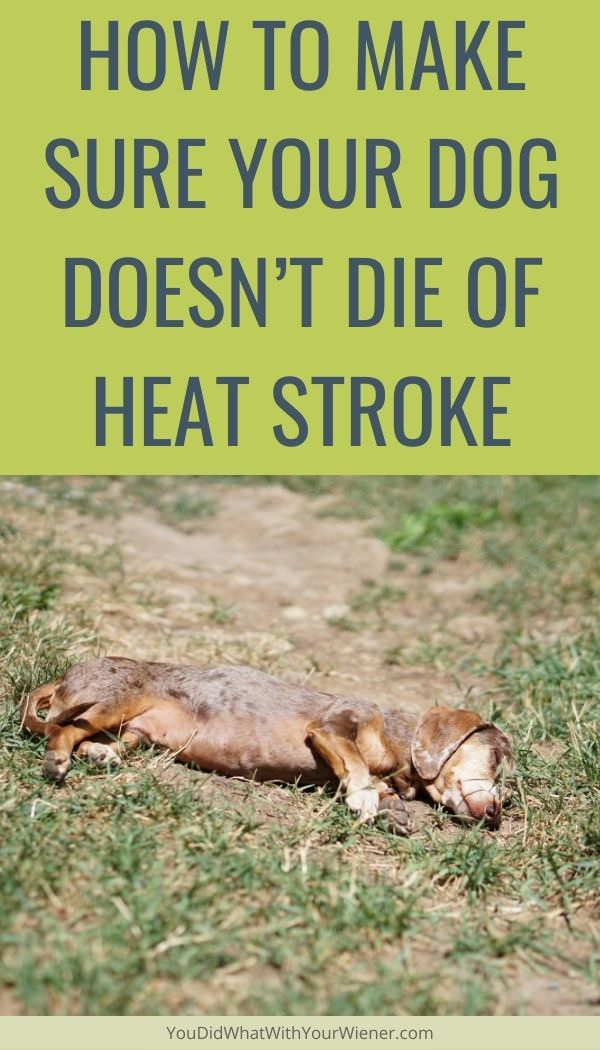 You want to make sure your dog stays safe during hot weather. Here is how to make sure your dog doesn't die of heat stroke.