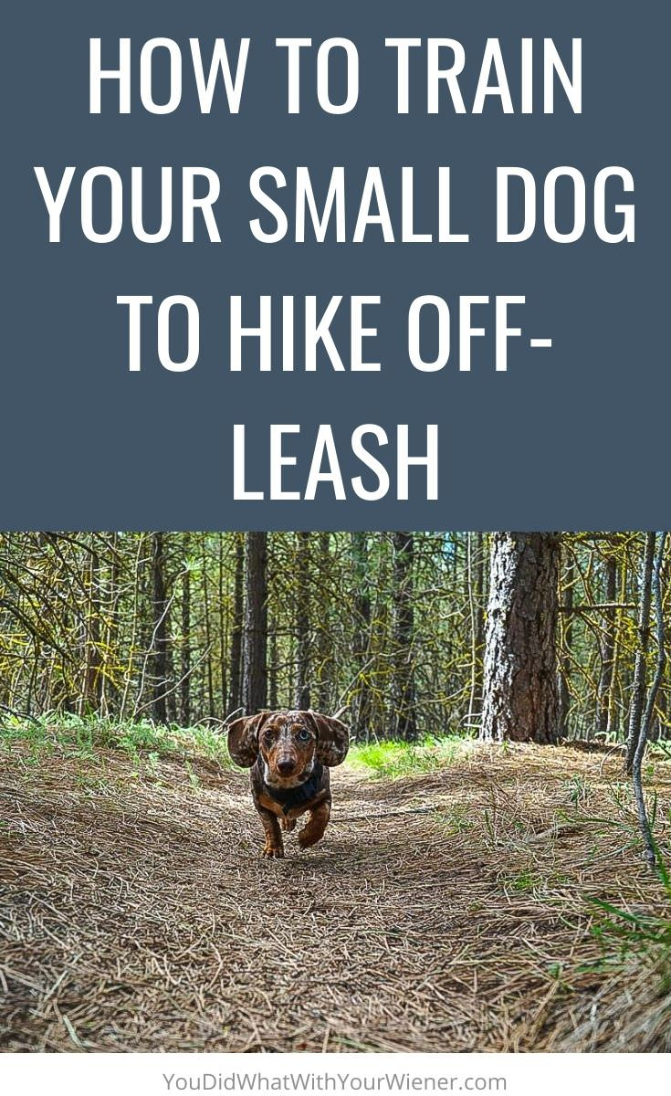 Do you want to learn how to hike with your dog without a leash? Here are some tips on how to train your small dog to hike off-leash.