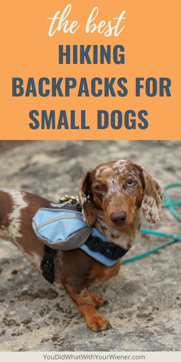 The best expert-recommended hiking backpacks to fit tiny and very small dogs.