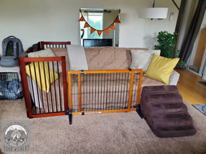 Dog gates, and a ramp, around a couch to keep my Dachshund from jumping off of it