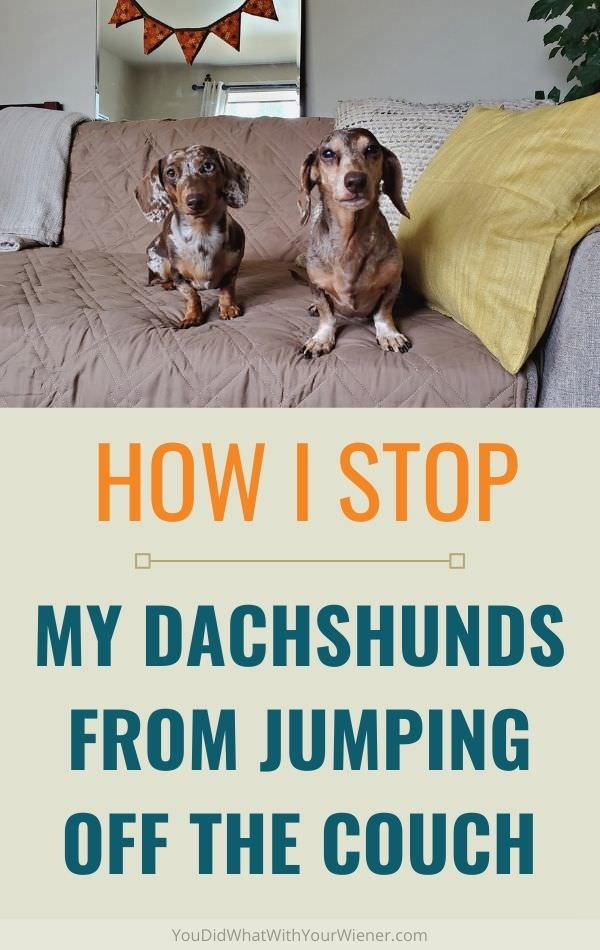 How I prevent my Dachshunds from jumping off the couch