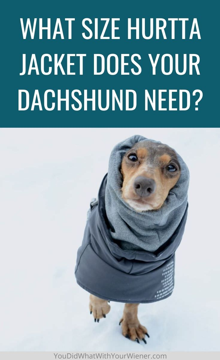 How to measure and select the right size of Hurtta dog jacket for your Dahcshund