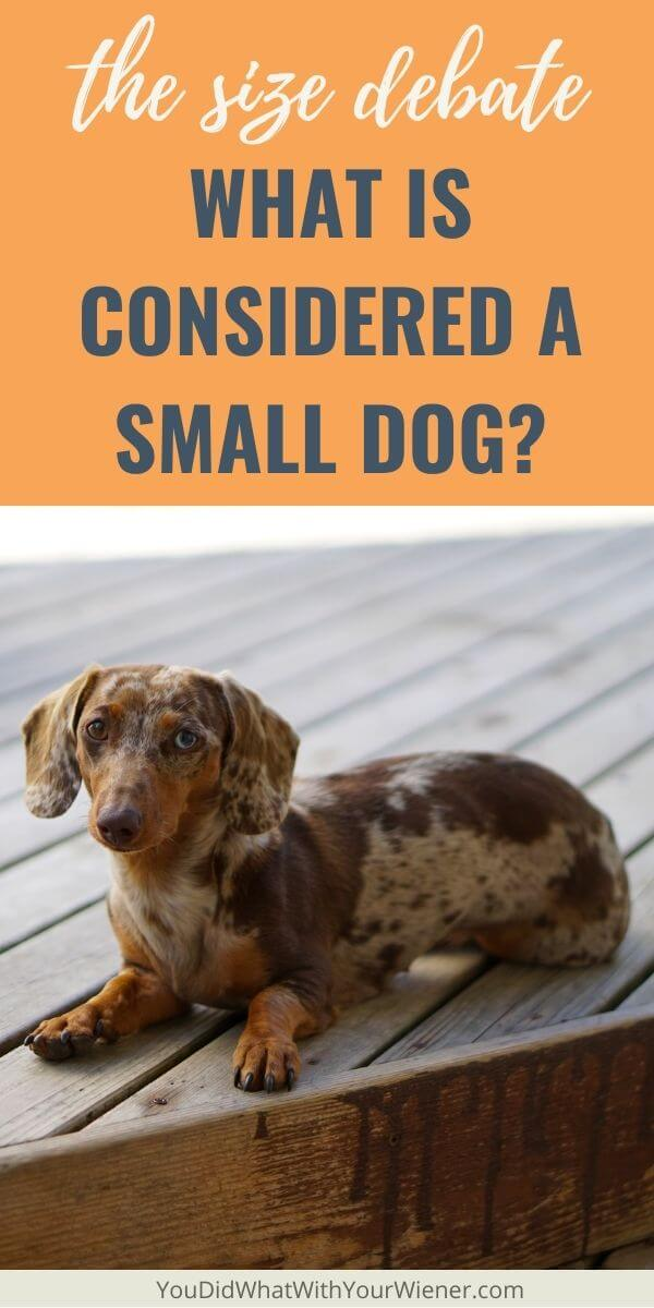 Do you know what a small dog is? Here's what's considered to be a small dog.