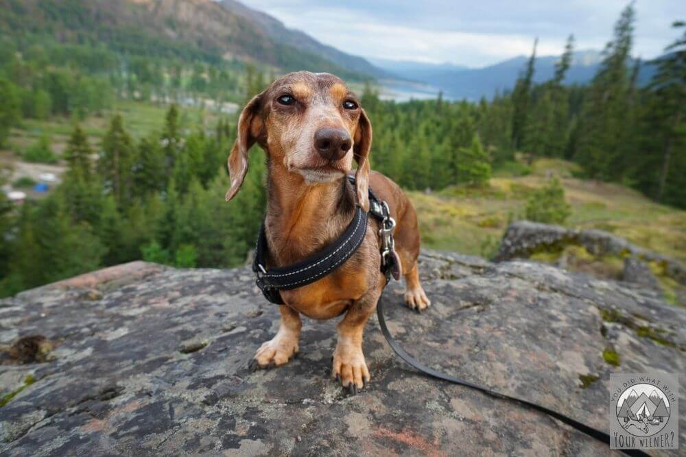small dog standing on boulder