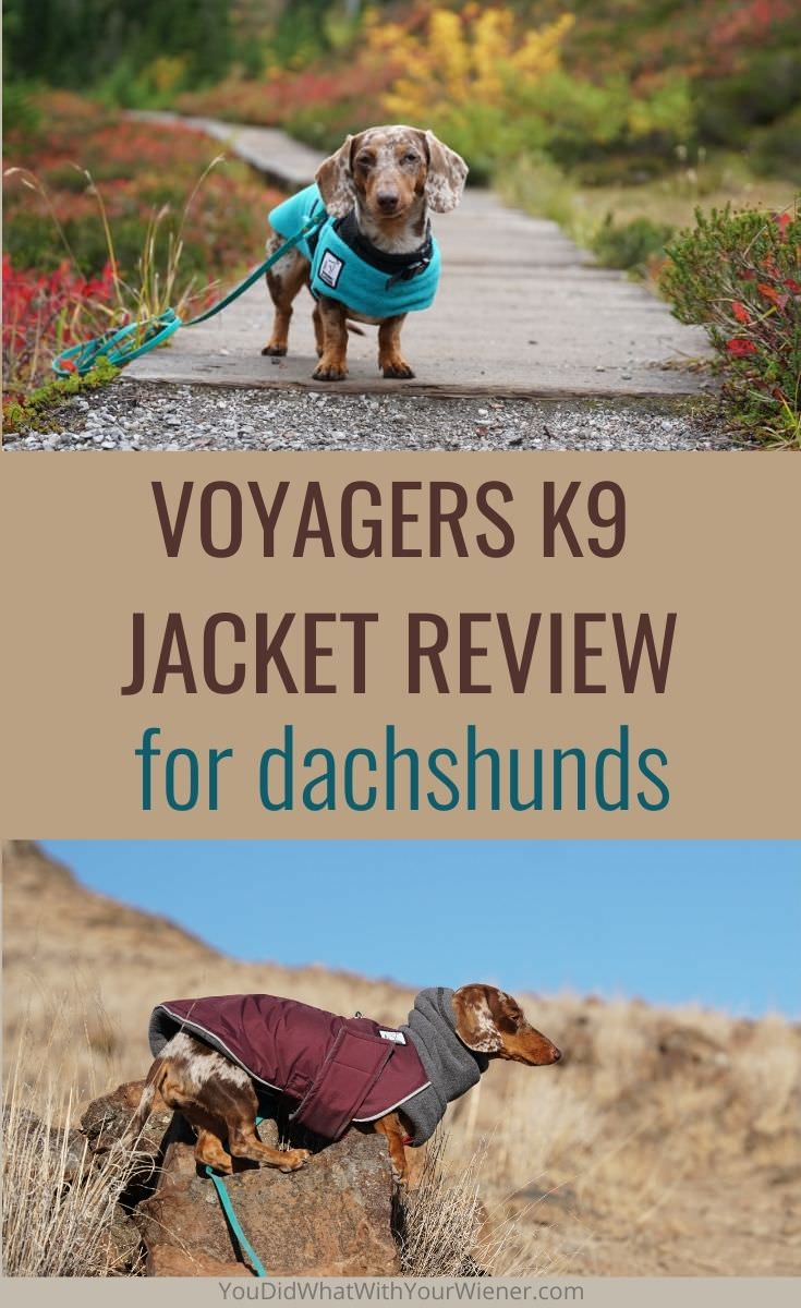 Voyagers K9 Apparel dog jacket review from the perspective of a Dachshund owner who hikes and camps with hers.