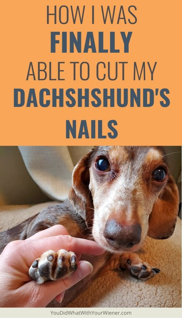 I've been fighting with my Dachshunds to cut their nails for years. This is what finally worked for me.