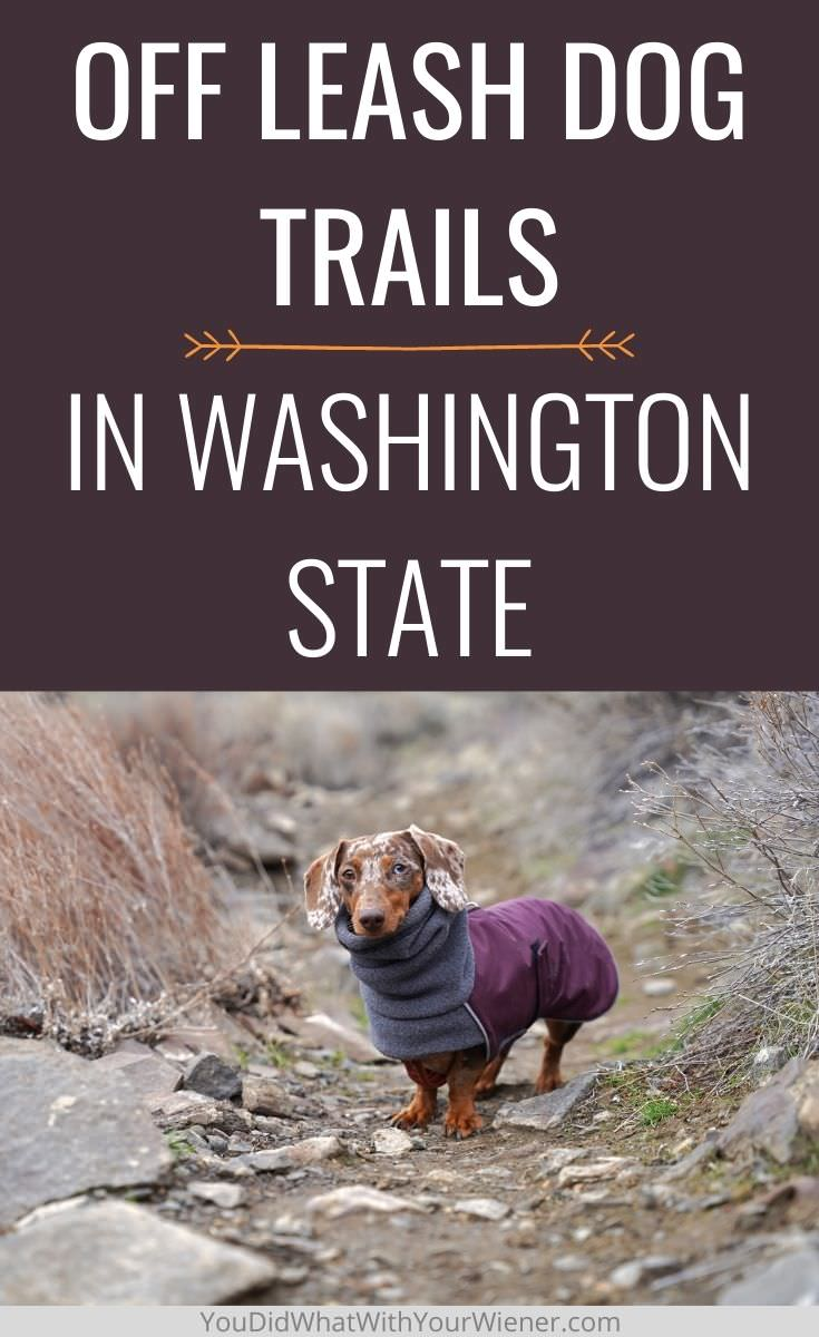 Where you can hike with your dog off leash in Washington State