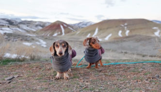 Two Dachshunds standing at the Painted Hills overlook