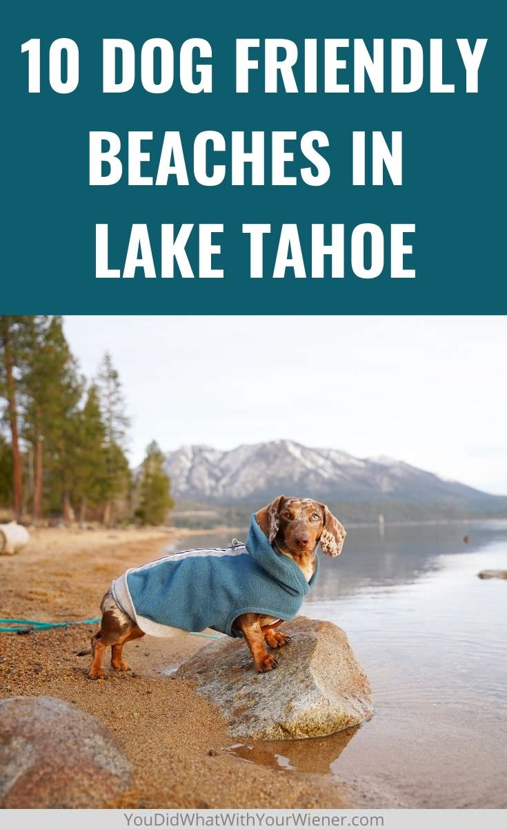 A list of the best dog friendly beaches in lake Tahoe