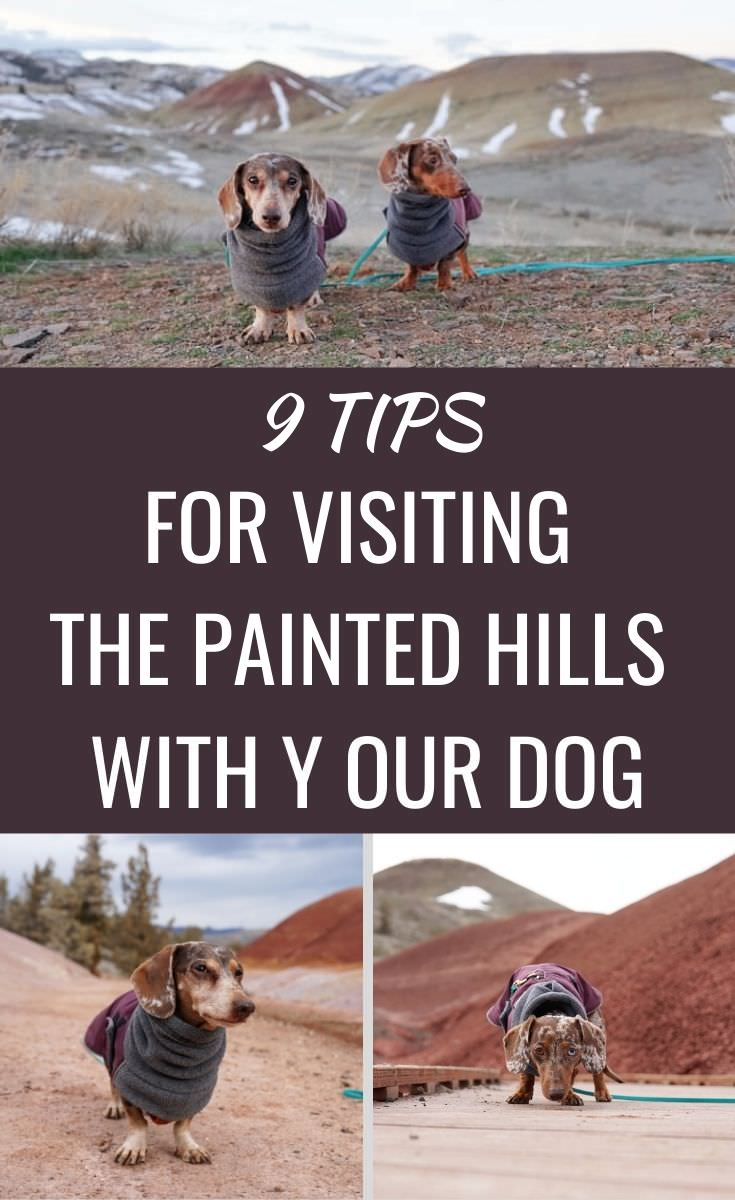 Tips for Visiting the Pained Hills National Monument with Your Dog