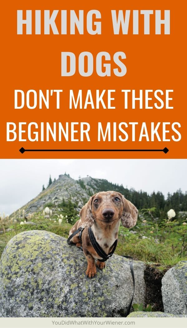 Don't make the same mistakes I did when you start hiking with your dog