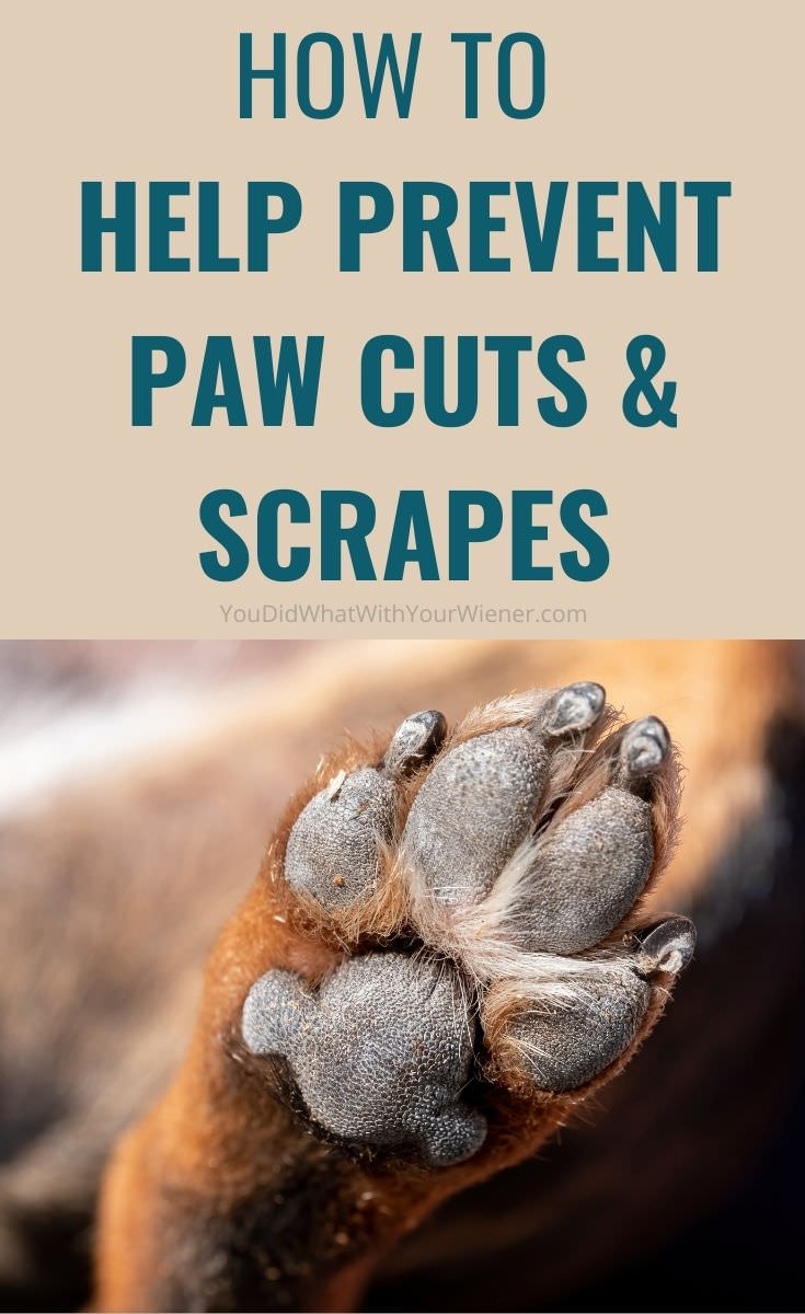 Help prevent dog paw pad cuts and scrapes by making them thicker and tougher