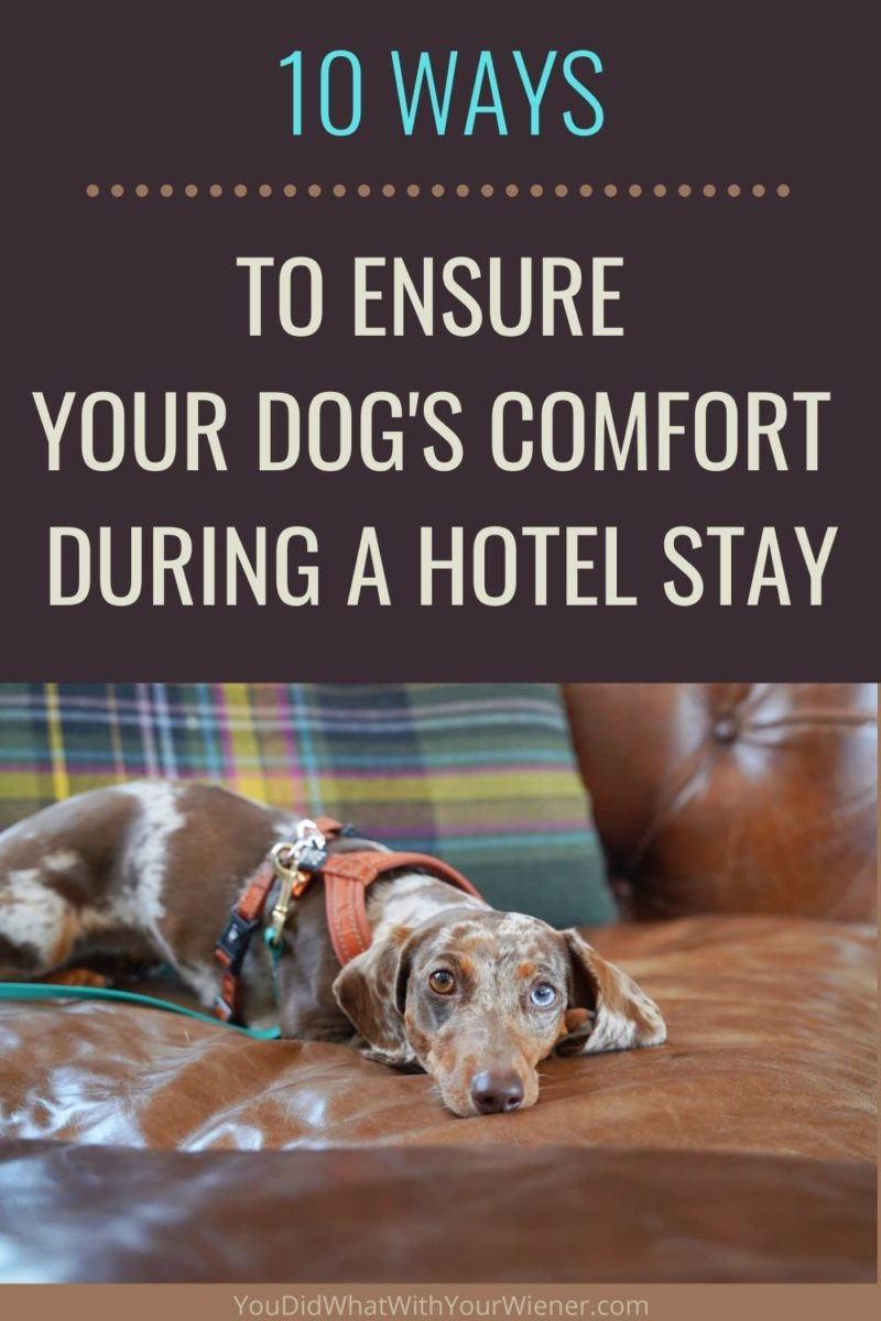 I travel with my dogs everywhere. It's one of my favorite things to do! But I don't want my happiness to be at the expense of theirs. I do my best to respect their preferences and make them as comfortable as possible.