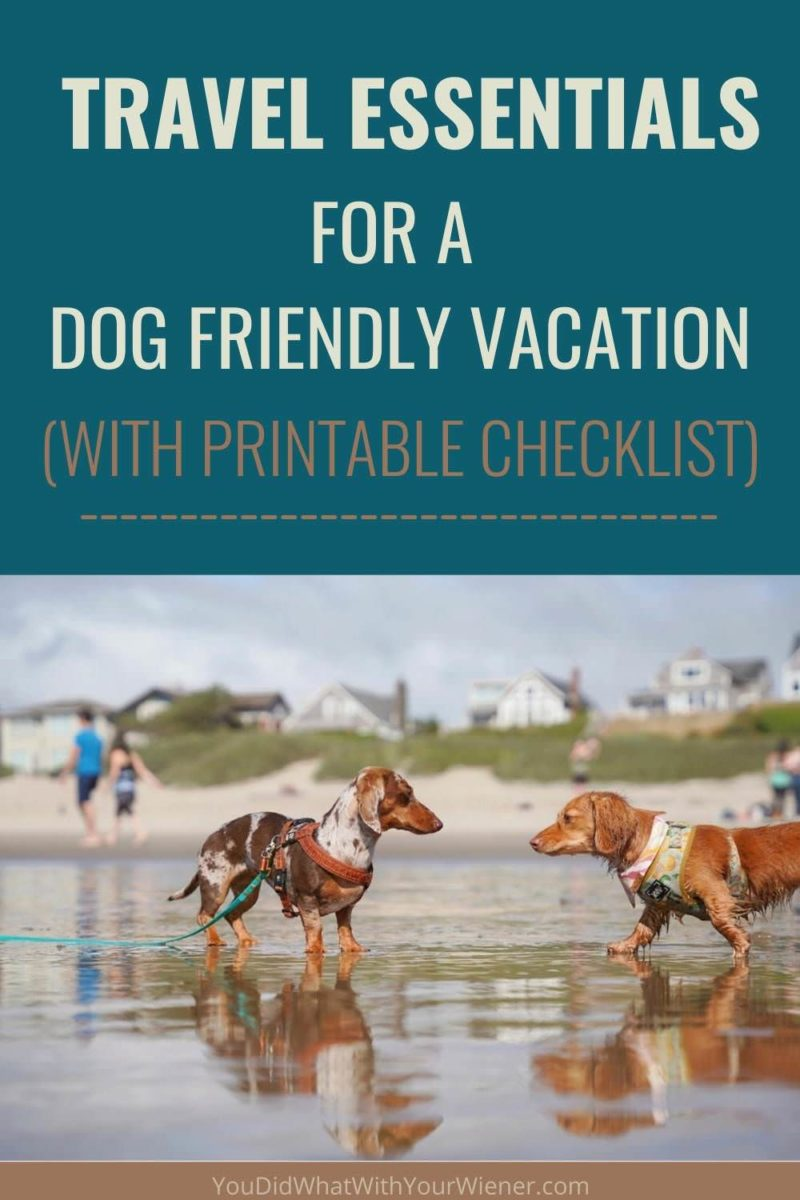 Dog travel essentials for staying in a hotel with your dog