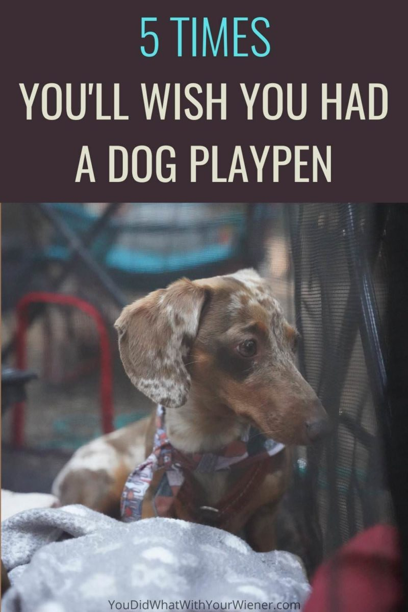 Read: 5 Reasons You Need a Covered Portable Dog Playpen for Your Small Dog